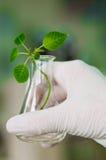 Biotechnologie Stockfotografie