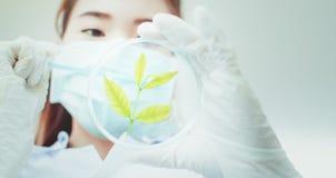 Biotechnologieconcept met wetenschapper in laboratorium royalty-vrije stock fotografie