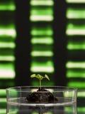biotechnologieforskning Royaltyfri Foto