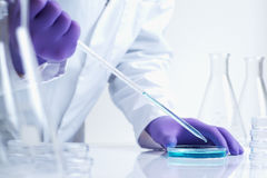 biotechnologii laboratorium badanie Obrazy Stock