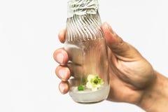 Biotechnologii pojęcie z naukowem klonował mikro rośliny w lab ręka trzyma próbnej tubki w z Vitro fotografia royalty free