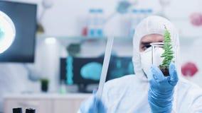Biotechnologist στην άσπρη φόρμα που μετρά με έναν κυβερνήτη το μήκος εγκαταστάσεων δειγμάτων απόθεμα βίντεο