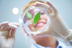 Biotechnology. Woman scientist holding a test tube with plant Royalty Free Stock Photography