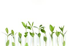 Biotechnology. Agriculture agronomy background biochemistry biology development Stock Photo