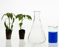 Biotechnology concept Stock Photography