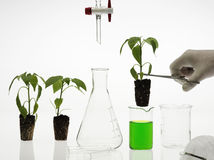 Biotechnology concept. Biotechnology laboratory analysis and research Stock Photo