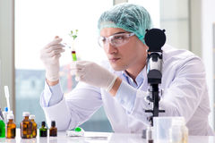 The biotechnology concept with scientist in lab Royalty Free Stock Photo
