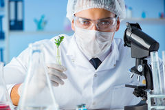 The biotechnology concept with scientist in lab. Biotechnology concept with scientist in lab Stock Images