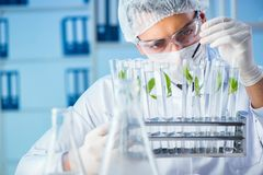 The biotechnology concept with scientist in lab. Biotechnology concept with scientist in lab stock photo