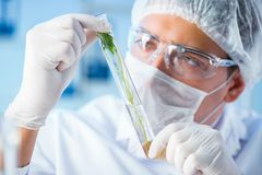 The biotechnology concept with scientist in lab Royalty Free Stock Image