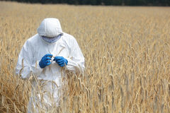 Biotechnology engineer on field examining ripe ear. Biotechnology engineer in white uniform,goggles and gloves on field examining ripe ears of grain Stock Photography