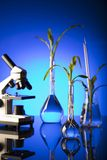 Laboratory theme. Place for text. Biotechnology and floral science theme. Experimenting with flora in laboratory. Blue background Stock Photos