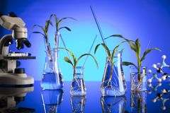Biotechnology and floral science theme. stock photo