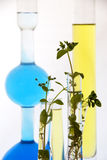 Biotechnology - lab experiment Stock Photo