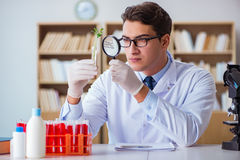 The biotechnology scientist working in the lab Royalty Free Stock Photo