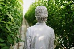 Biotechnology woman engineer examining plant leaf Stock Photos