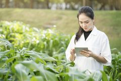 Biotechnology woman engineer examining plant leaf for disease. Science and research concept Stock Photography