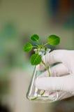 Biotecnologia Immagine Stock Libera da Diritti