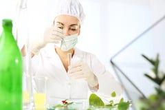 Biotecnologia in allevamento vegetale Immagine Stock