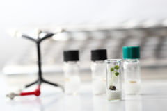 bioteknikexperiment royaltyfria foton