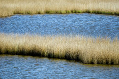 Biotope. Detail of the Wadden Sea and some reed Stock Photography