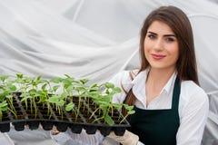 Biovoedselproductie Stock Afbeelding