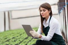 Biovoedselproductie Stock Foto's