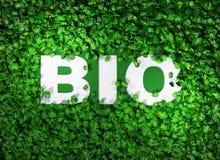 BIOwoord onder het gras Stock Foto