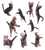 The biped cat. The cat on two legs on the white isolated background royalty free stock photos