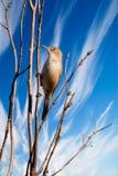 Bir on Blue Sky. A bird clinging on a tree on blue sky background Royalty Free Stock Photo