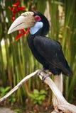 Birв toucan Royalty Free Stock Photography