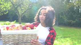 Biracial African American mixed race teenage girl young woman carrying basket of apples. Through a sunny apple orchard putting them on a gray tractor and eating
