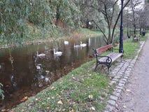 Birbs w parku Zdjęcia Stock
