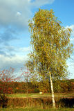 Birch. The image shows an autumn landscape with a birch tree, with its white bark, in the front. On the right side is a rowan tree with its red berries. In the royalty free stock photography