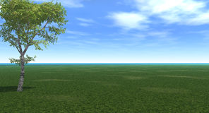 Birch. Alone birch tree - 3d landscape scene. More in my portfolio Royalty Free Stock Images