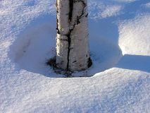 Birch. And snow stock photo
