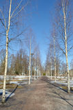 Birch alley in Lappeenranta. Stock Photos