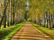 Birch alley - Preshpect in autumn, Yasnaya Polyana, Tula, Russia Royalty Free Stock Photo