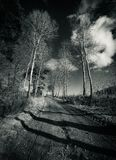 Birch alley. Road between birch trees in the fields Stock Photo