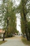 Birch alley in Varazdin Stock Image