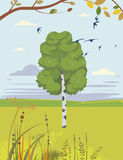 Birch And Swallows Summer Landscape Royalty Free Stock Photography