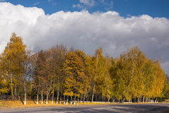 Birch in autumn and sky Stock Image