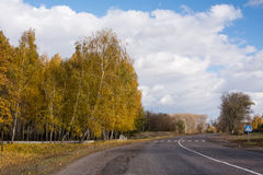 Birch in autumn and sky Royalty Free Stock Photo