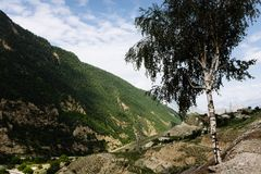 Birch on a background of mountains and blue sky with clouds royalty free stock images