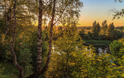 Birch on the bank of the river. In the rays of the setting sun, July evening Stock Photography