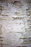 Birch Bark. A closeup of paper birch bark suitable for use as a rustic background or a photo of a typical bark structure stock photography