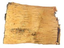 Birch bark. Piece of a bark of a birch in the form of an ancient scroll for the letter Stock Photo