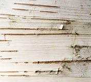 Birch Bark Abstract Stock Image