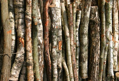 Birch Bark Background Stock Images