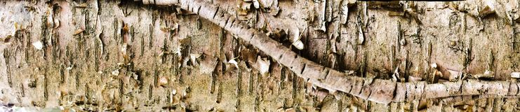 Birch Bark Banner Royalty Free Stock Image